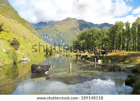 picturesque landscape with river in New Zealand - stock photo