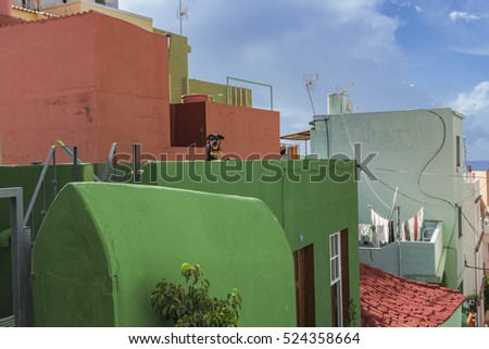 Picturesque old quarter of Tazacorte, la Palma, with funny dog on the balcony of the green hous