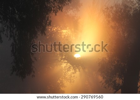 picturesque summer landscape misty dawn in an oak grove on the banks of the river - stock photo