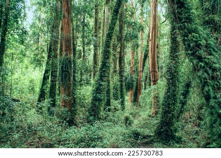 Picturesque view of tree trunks overgrown with fern
