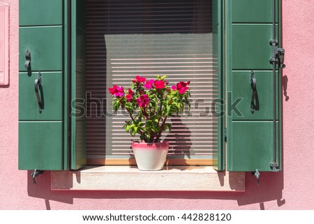 Picturesque window with shutters and flowers on pink wall of houses on the famous Burano island. Venice, Italy, Europe - stock photo