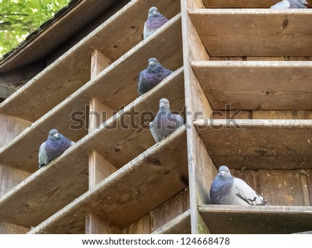 Pidgeon house - stock photo