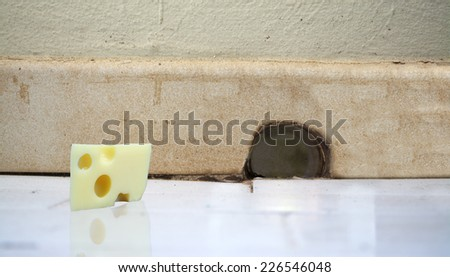 piece of cheese in front of a mouse hole in the wall - stock photo