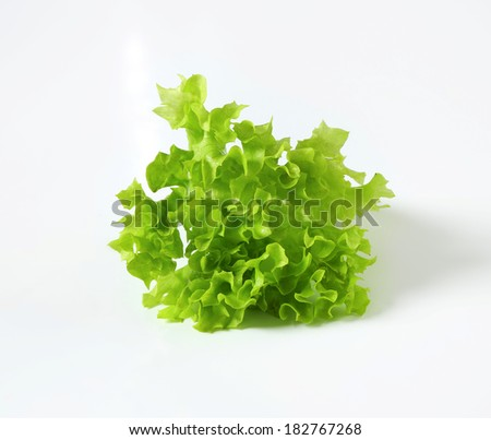 piece of green lettuce - stock photo