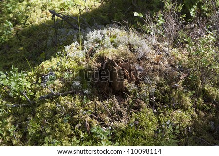 Piece of wood with moss and lichen among the vegetation - stock photo