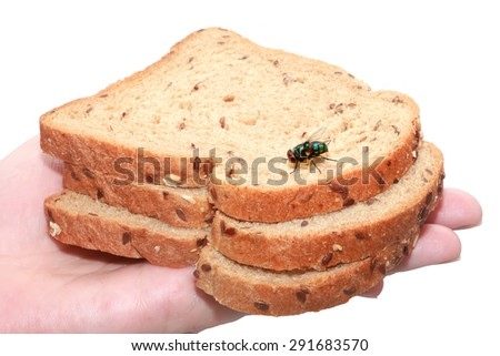 Pieces of bread and Blow fly (Lucilia caesar, Calliphoridae) on a hand. Isolated on a white background - stock photo