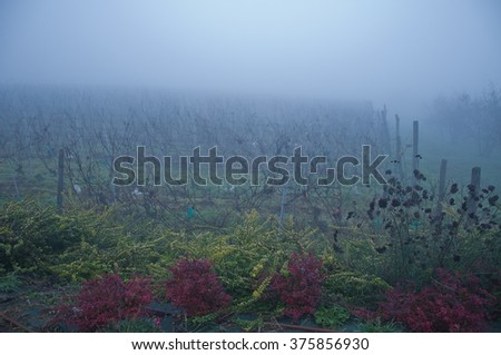 Piedmont vineyards planted with barbera misty,italy - stock photo