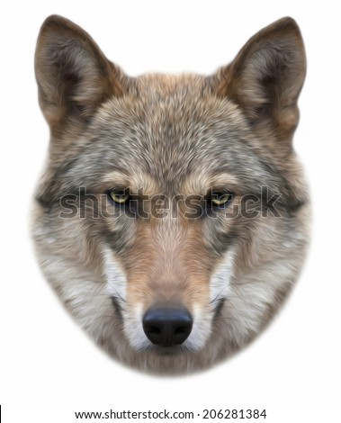 Piercing look of a severe wolf, isolated on white background. European wolf, beautiful animal and dangerous beast. Amazing portrait in oil painting style, great for user pic, icon, label or tattoo. - stock photo