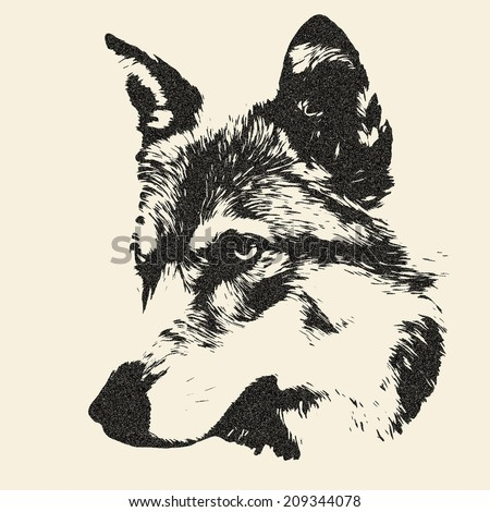 Piercing look of severe wolf, isolated on sepia background. Portrait of the forest dangerous beast, Canis lupus lupus. Great for user pic, icon, label or tattoo. Amazing illustration in grunge style. - stock photo