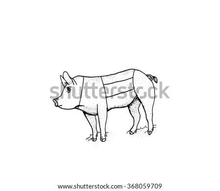 Pig Diagram Animal Illustration Stock Illustration 368059709