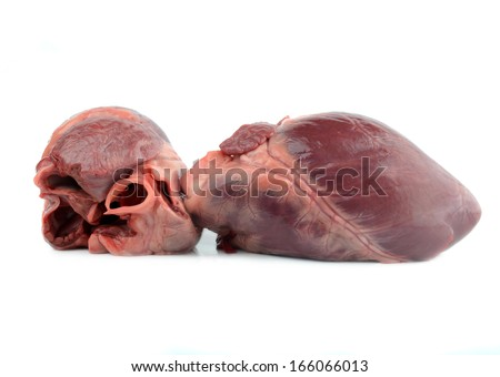 Human Heart Organ Stock Photos Royalty Free Images