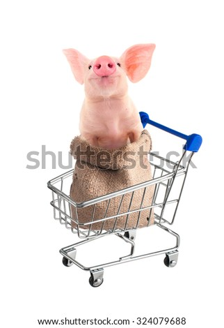 Pig in the shopping cart. Isolated. - stock photo