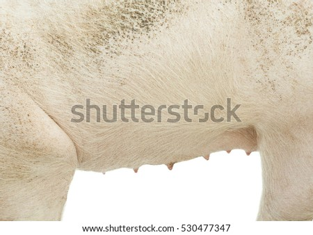 pig texture and white background