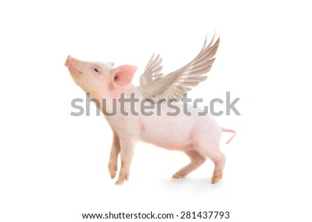 pig with wings on a white background. studio