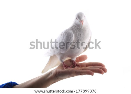pigeon on a hand at  woman on a white background - stock photo