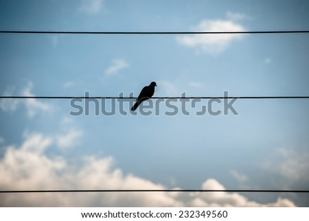 Pigeon on a wire/ Pigeon on a wire - stock photo