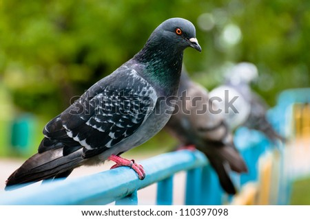 Pigeon sitting on support in park with blurry background - stock photo