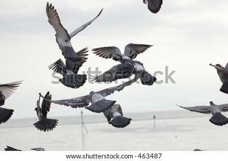 Pigeon Take-off 02 - stock photo