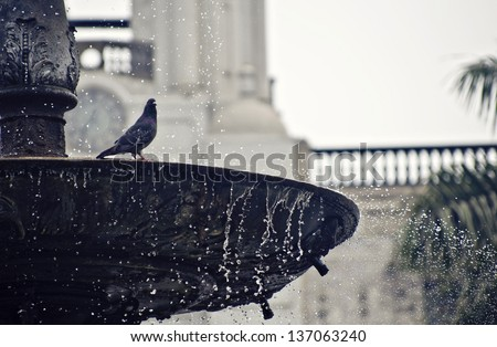 Pigeon taking a shower in a fountain - stock photo