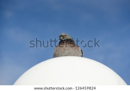 pigeon white ball on a streetlight - stock photo