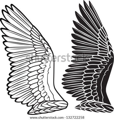 Pigeon wings isolated on white - stock photo
