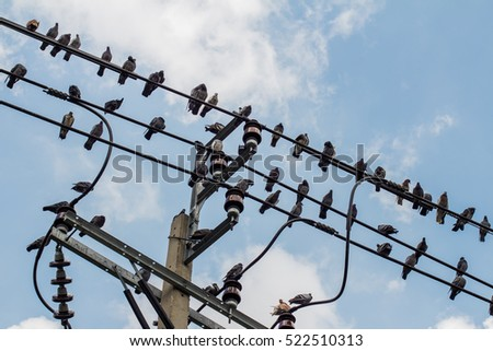 Pigeons bird perching and resting on cable cloudy blue sky