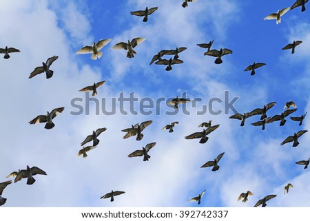 Pigeons fly against a background of blue sky and sun shine, flock of birds, a symbol of peace