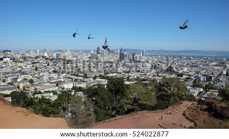 Pigeons fly over San Francisco on Corona Heights Park