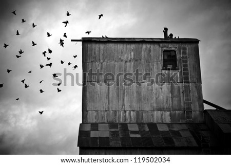 Pigeons Flying Away From an Old Grain Mill - stock photo