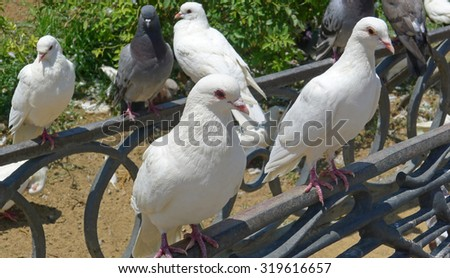 Pigeons on city street