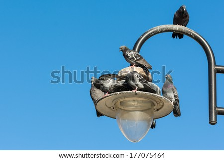 Pigeons On Old Light Pole With Blue Sky Background - stock photo