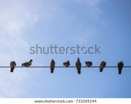 pigeons on the wire and blue sky