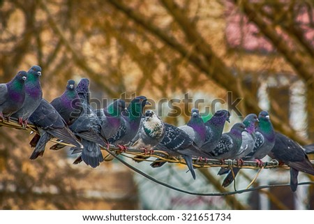 Pigeons sit on wires in city park - stock photo
