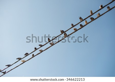 Pigeons sitting on wires like musical notes.