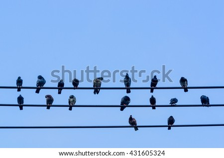 Pigeons sitting on wires look like a musical notes.
