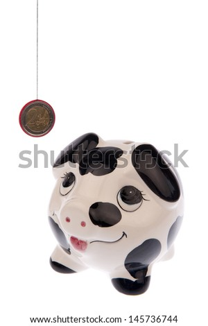 Piggy bank with black and white cow spots, looking upwards to a Euro coin and isolated in white background - stock photo
