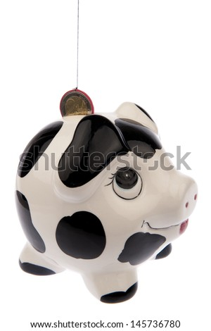 Piggy bank with black and white cow spots, looking upwards to a Euro coin in its slot and isolated in white background from the right side - stock photo