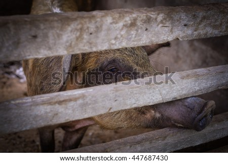 piglet for meat production - stock photo