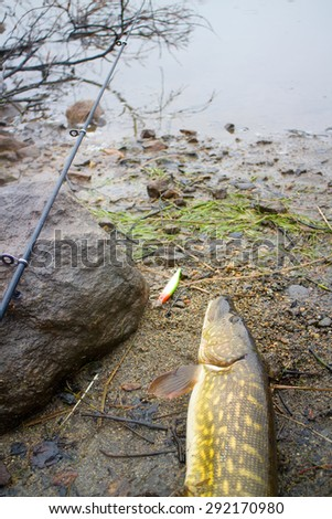 pike and fishing in Norway - stock photo