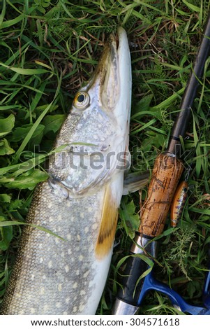 pike fishing catch on the grass and fishing gear - stock photo
