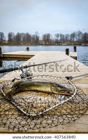 Pike fishing trophy in vertical view - stock photo
