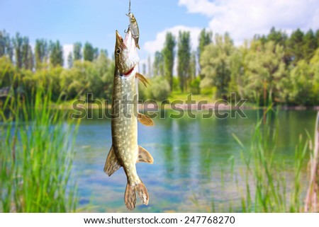 Pike on the background of the river landscape - stock photo