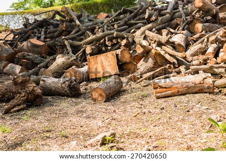 Pile and timber of tree branch - stock photo