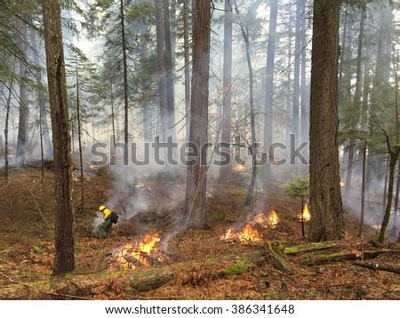 Pile Burning in Tahoe - stock photo