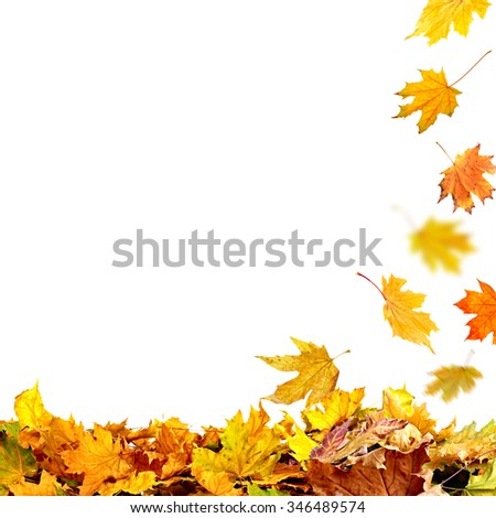 Pile of autumn leaves, isolated on white