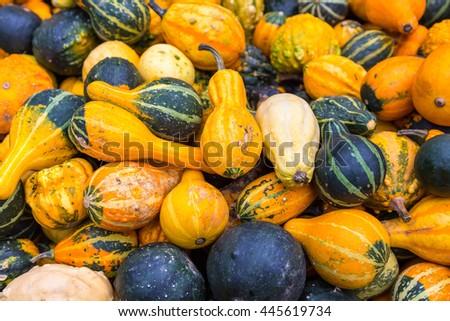 Pile of big colorful pumpkins, autumn harvest natural background - stock photo