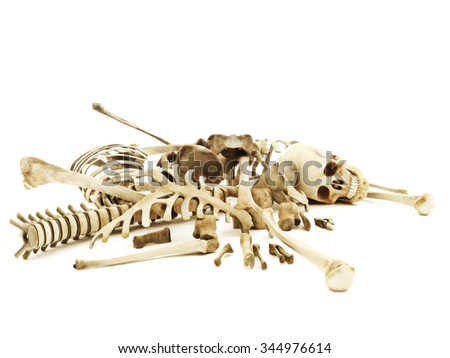 Pile of bones, photo realistic 3d rendering on a isolated white background. - stock photo