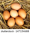 pile of brown eggs in a nest - stock photo