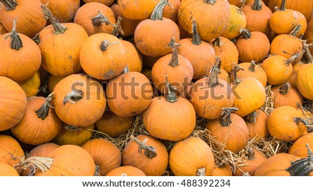 Pile of carving pumpkin on straw for sale at local barn. Bright orange round Halloween pumpkin to carve into Jack-O-Lanterns. Background of fall, autumn, Halloween, Thanksgiving season. Panorama style