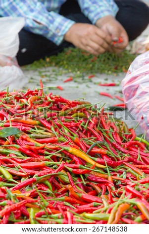 pile of chilli in local market, thailand - stock photo
